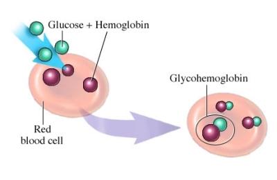 glycosylated-Hgbjpg